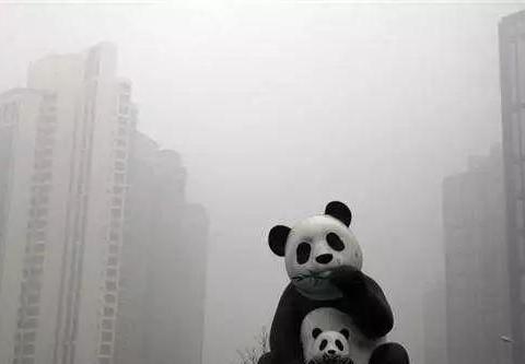雾霾天频繁,树袋宝宝提醒要当心