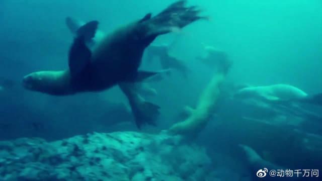 幼年海豹存活率低,很难成功繁殖,容易成为其它食肉动物的美餐