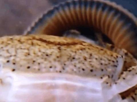 男子尝试把蚂蝗放到螃蟹的地盘上,试验结果令人大跌眼镜