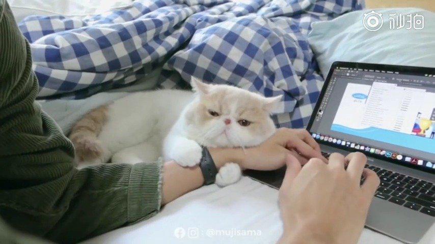 据微博电影工厂:泰国小哥和他家圆滚滚的加菲猫……