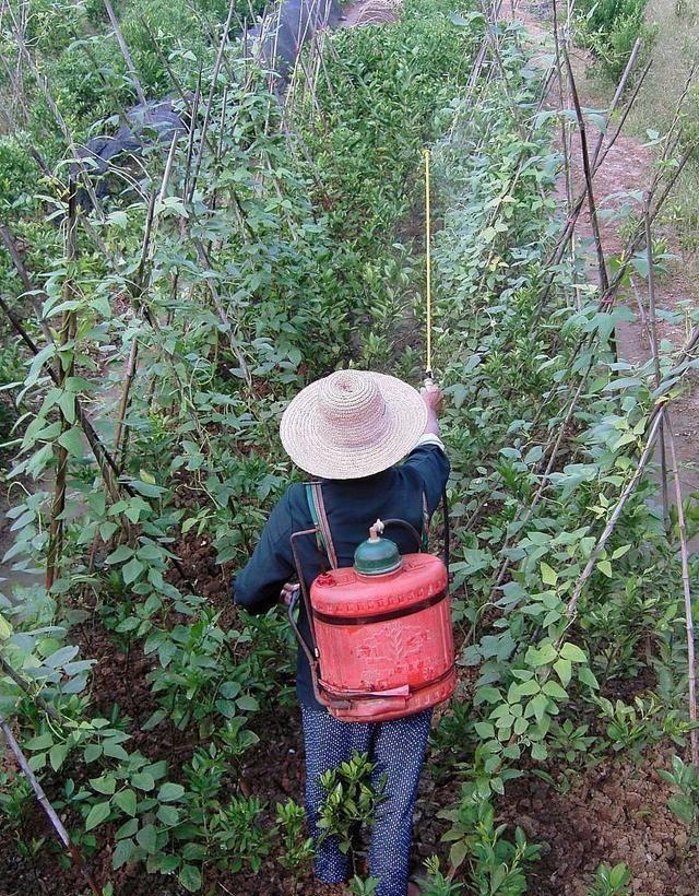 老王种蔬菜和瓜果,人家施肥,他喷牛奶,收入却比别人高三倍