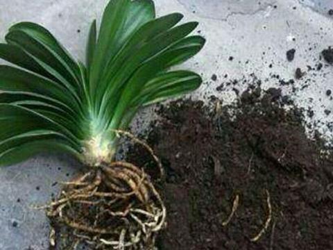 用锯末这样养花,促进生根,长得旺盛,适合养大多数花卉