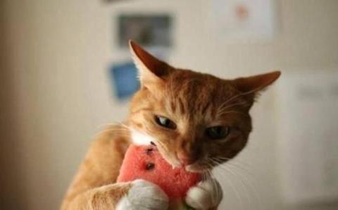 涨知识了,原来猫咪也吃素,但这五类万万不能喂