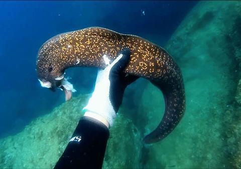 男子深海潜水发现斑纹怪鱼,好奇抓起查看结果被吓了一跳