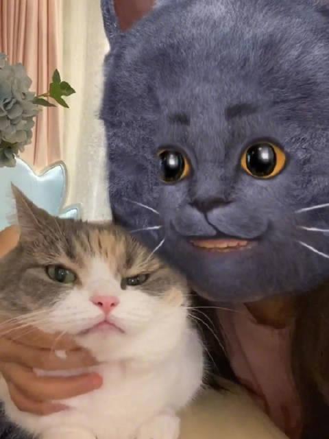 变种后,与猫咪交流多了几分亲切感