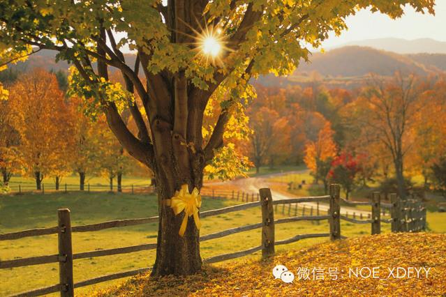 听歌   Tie a Yellow Ribbon Round the Ole Oak Tree——老橡树上的黄丝带