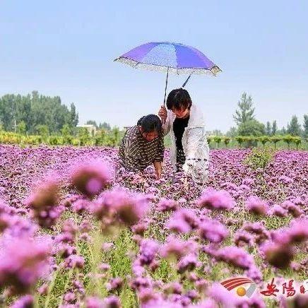 安阳县:藤上瓜果飘香 林下鸡鹅遍地