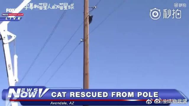 消防员正在营救一只被困在电线杆上的猫咪……