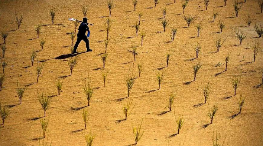 支付宝的蚂蚁森林真是存在,给我们的沙漠带来了巨大的变化
