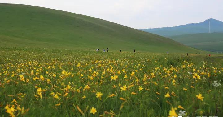 """风吹绿草遍地花——践行""""以人民为中心的发展思想""""·扎鲁特旗在行动"""