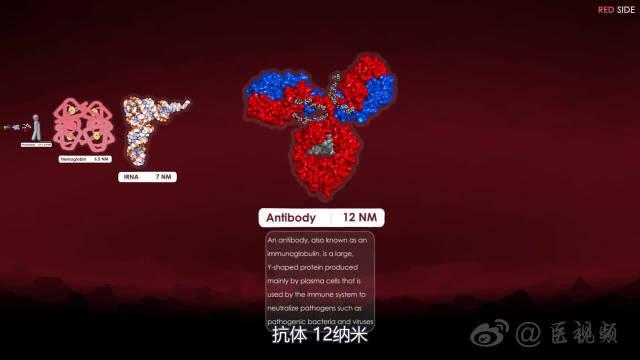 细胞和分子大小比较