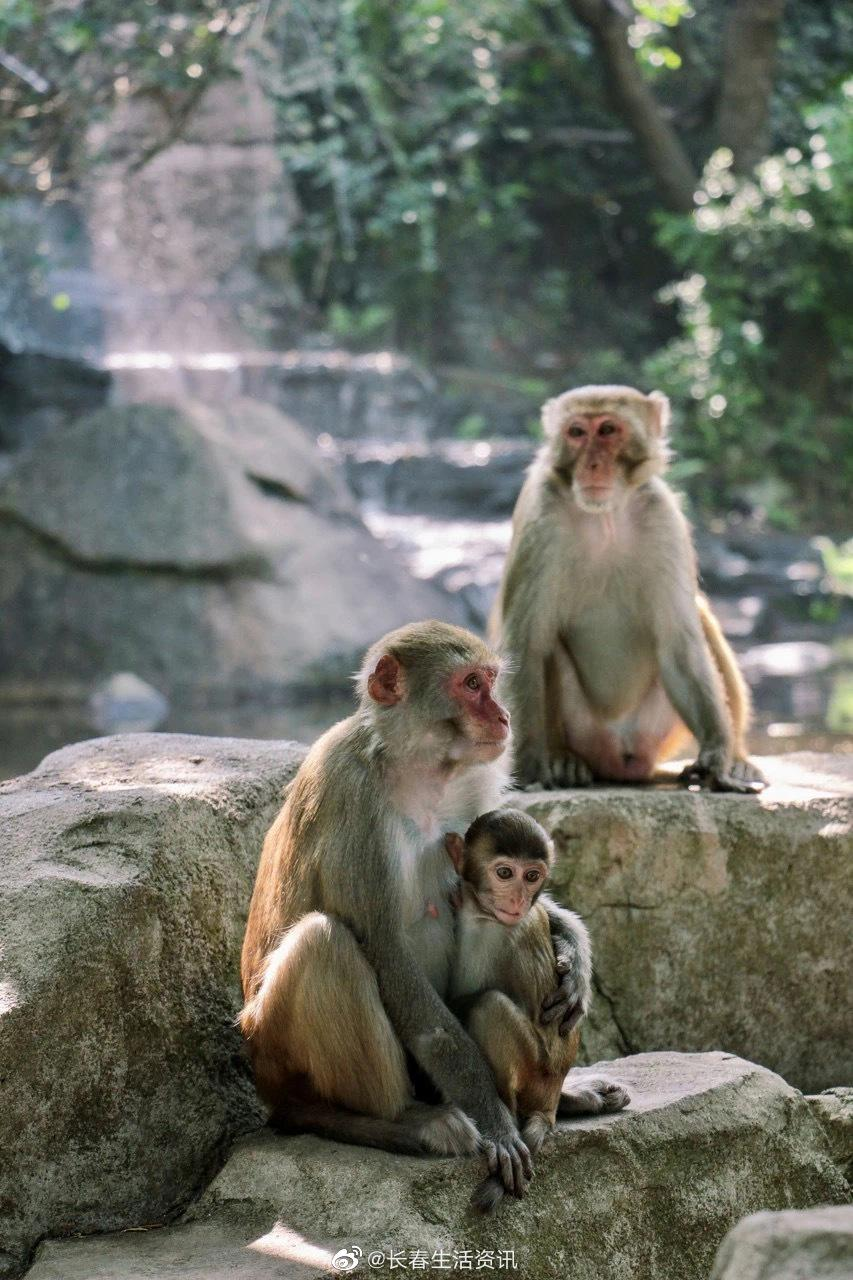 南湾猴岛 南湾猴岛是我国也是世界上唯一的岛屿型猕猴自然保护区