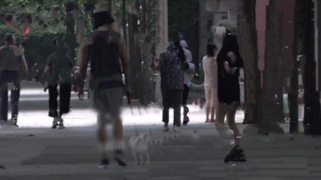 郑合惠子黄圣池恋情曝光,挽手遛狗举止亲密,同回住处疑同居