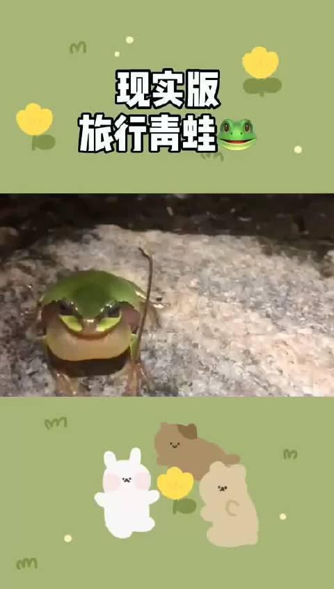 现实版旅行青蛙 来啦!