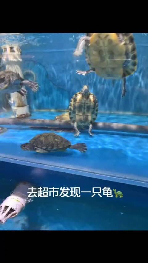 逛超市发现一只神龟,它可能看透了人生