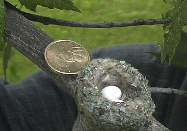 男子野外探险发现一个硬币大小的鸟窝,孵出两个指甲盖大小的鸟