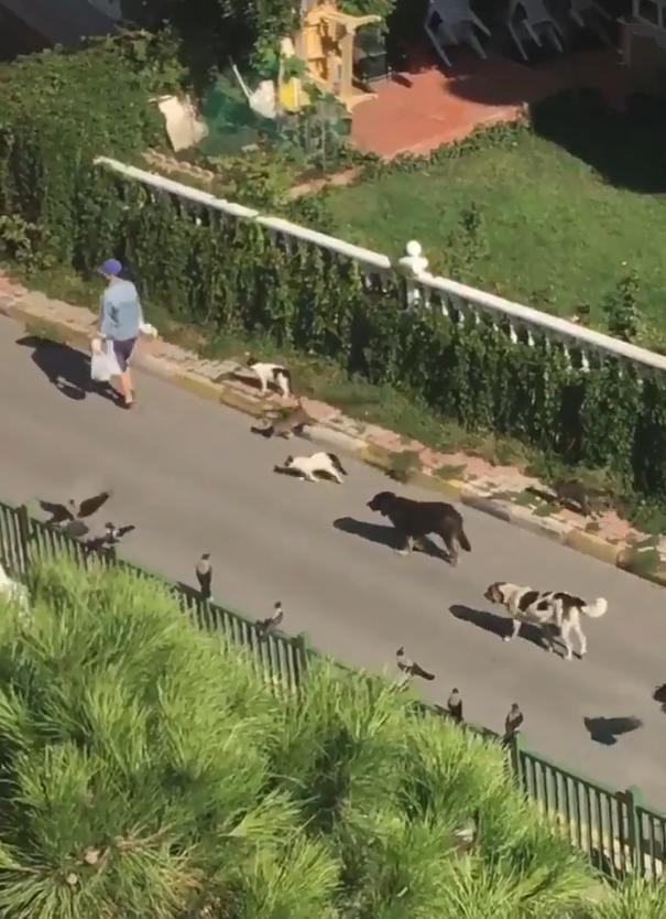 出门被猫狗和鸟包围,在逃迪士尼公主?不过是喂养流浪猫狗的好人
