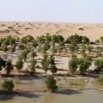 绿进沙退:新疆兵团在塔克拉玛干沙漠边缘筑起绿色屏障