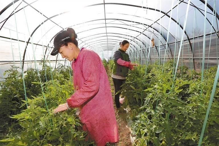 昌都市芒康县曲孜卡乡拉久西蔬菜基地帮助群众实现增收