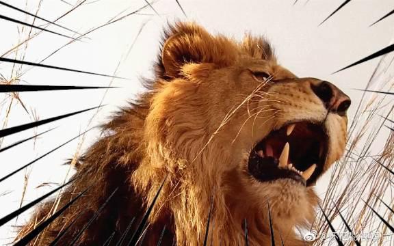 几人来到非洲草原旅游,却误入了狮群的领地,被困在车中两天两夜