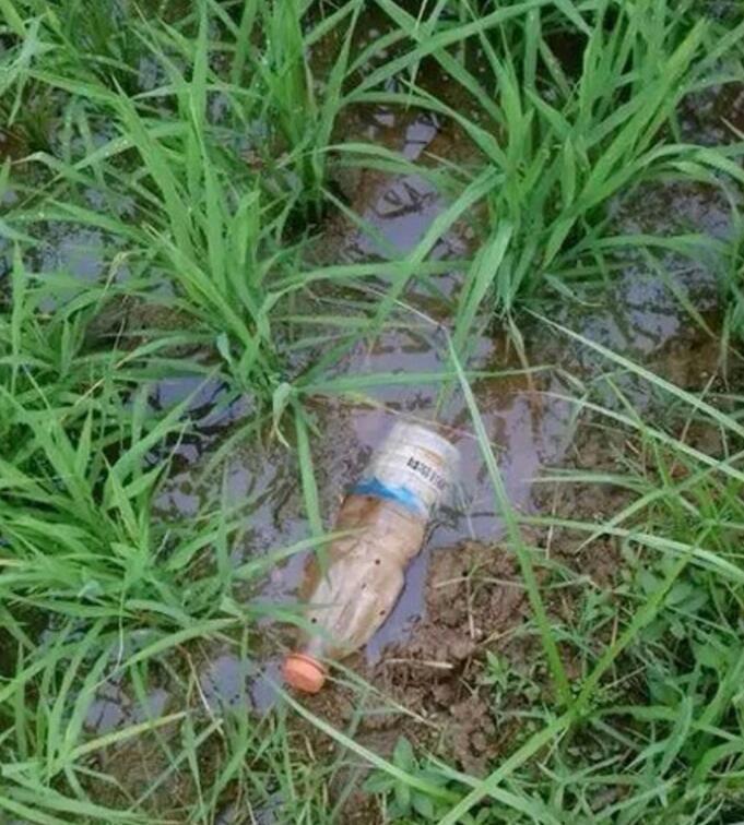 农村小伙将矿泉水瓶稍加改造, 放入水田中, 收获的宝贝能够致富!