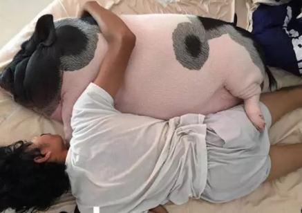 男子被送宠物猪当老婆,当时因为一时冲动,现在真心后悔莫及!