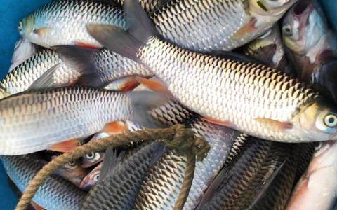 天气热,钓鱼高手都在用这几款自制饵料,用来钓大鲫效果太棒了