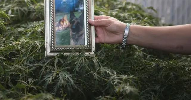 美国确认首只染新冠的狗狗死亡,已有肺部症状,还有25只宠物感染