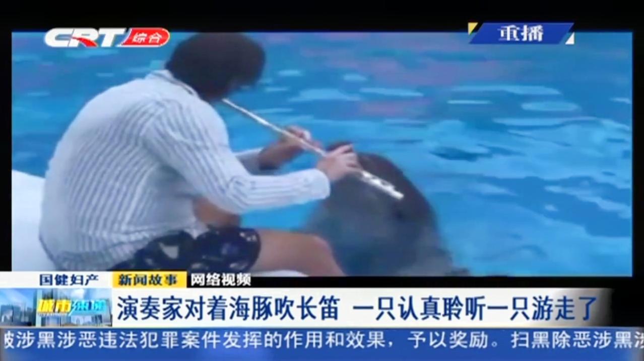 温馨画面!俄罗斯演奏家水族馆吹长笛,好奇海豚认真聆听