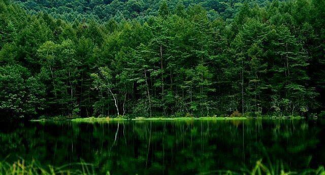 日本北海道、美瑛绿池和蓝绿色的水是四季不同的风景