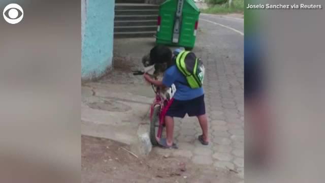 厄瓜多尔一孩子出行前先把自己的宠物狗戴上了口罩……