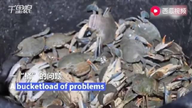 阿尔巴尼亚蟹多成灾,渔民深受其害,网友:不能吃蟹?
