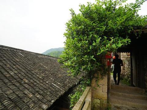 """苍南古村,曾盛产陶瓷媲美景德镇,今是鲜为人知的""""隐秘角落"""""""