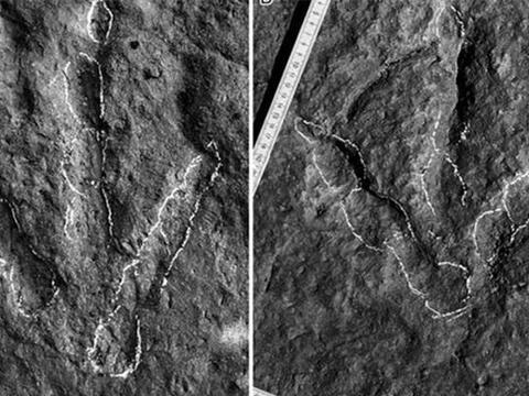 """""""巨大鸡爪痕迹""""出现在重庆公园,古生物学家揭开真相!"""