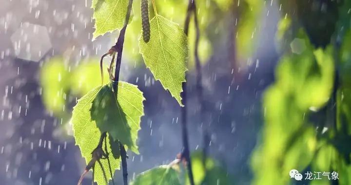 """未来几天""""主角""""还是它!东北冷涡携雨来,气温重回清凉状态"""