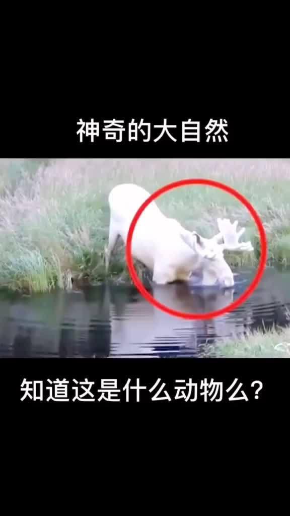 神奇的大自然,知道这是什么动物吗?