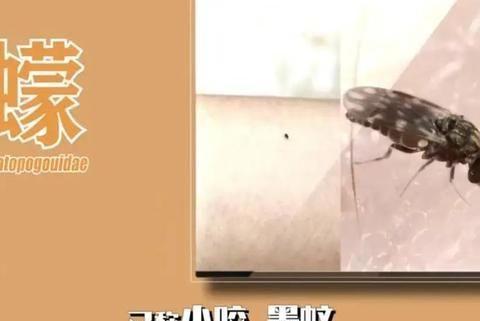 破案了!蚊子块的形状会告诉你是哪种蚊子干的!更重要的还有……