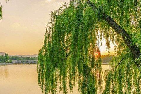 """王安石这首诗:每年""""春运""""想起它,总会黯然神伤!"""
