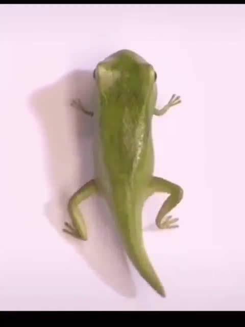 20秒看完蝌蚪变青蛙全过程,太神奇了!码给孩子看!