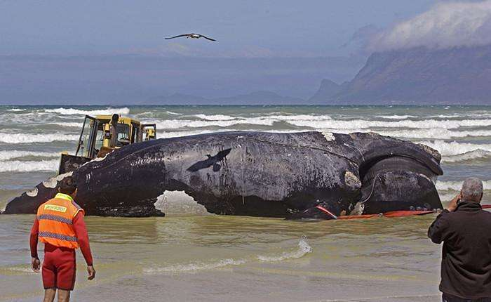 小伙海边发现巨型不明生物, 相关部门赶来把它拉到研究室