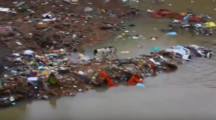 流浪狗垃圾堆产子被洪水冲散,狗妈游泳一个个寻回,母爱伟大