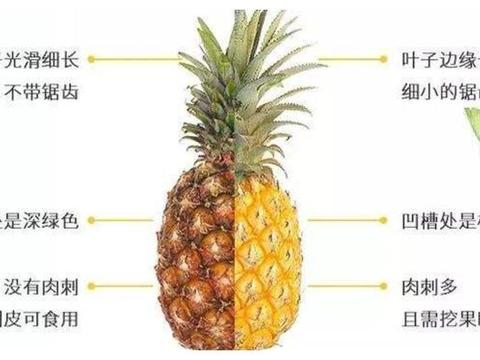 菠萝和凤梨,别再傻傻分不清了,教你一眼辨别菠萝和凤梨
