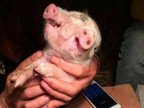 村民家产出一窝猪仔, 主人满心欢喜进去查看, 却吓的连连后退