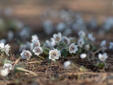 在近期,桃花节节升高,这四大星座与旧爱冰释前嫌,只差一句复合