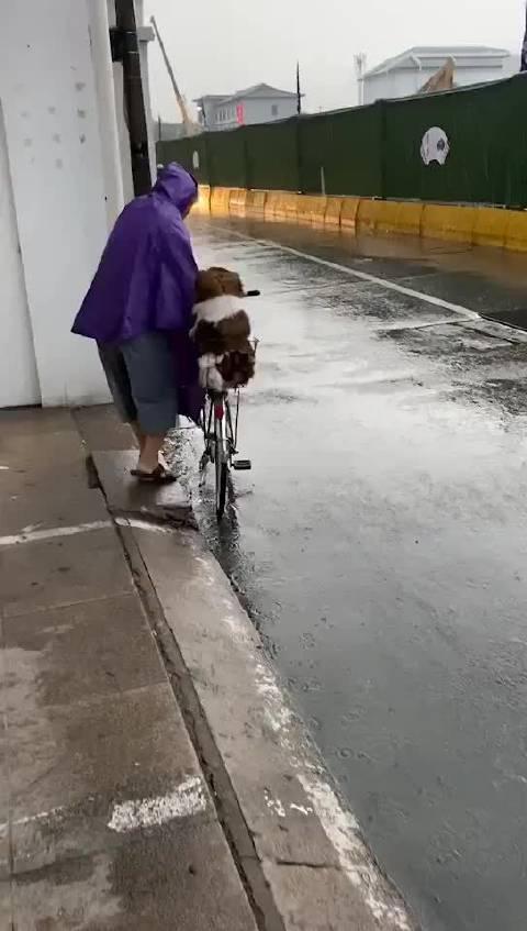 像不像小时候下雨天爸妈接你上下学的样子