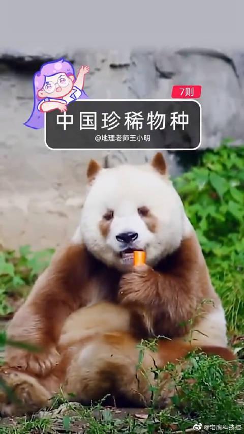 我们中国的神奇动物,长相逆天又超萌!