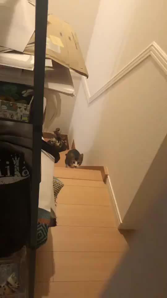 和猫咪玩123木头人,最后圆溜溜的眼睛出现在屏幕前,太可爱了!