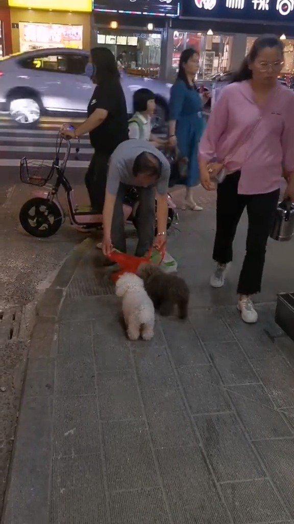 爷爷养的的狗子,自己进袋子来,好可爱啊