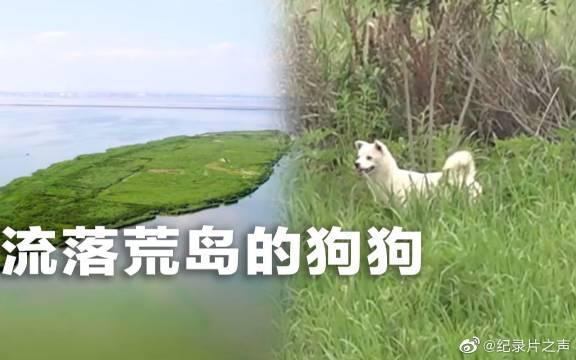 无人居住的小岛上,竟然生活着两只不到一岁的狗狗?