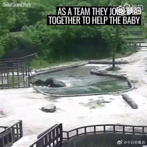 小象喝水时一个失足,掉进了水池里,惊慌求救……